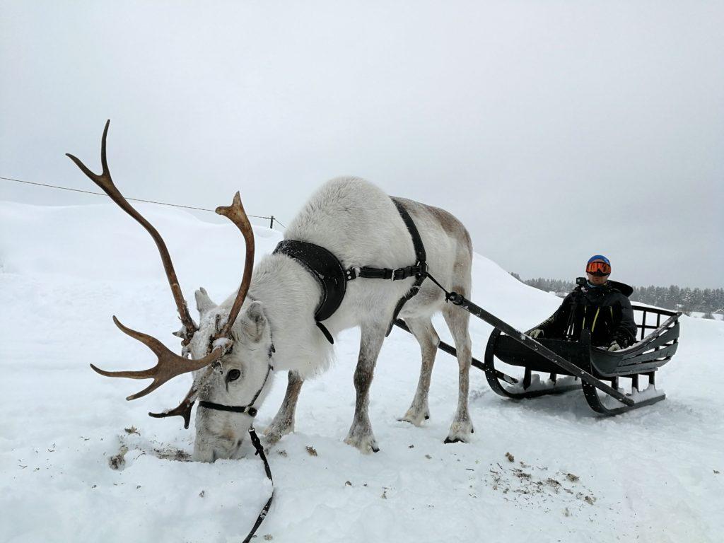 Den vita renen Frost